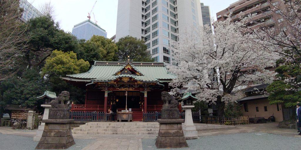 渋谷の金王八幡宮、金王桜が満開です